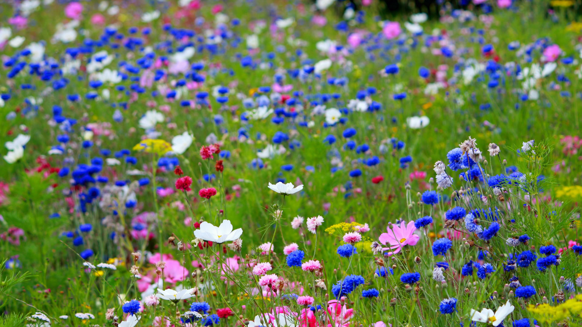 bekijk wallpaper: wilde bloemen kleurplaat
