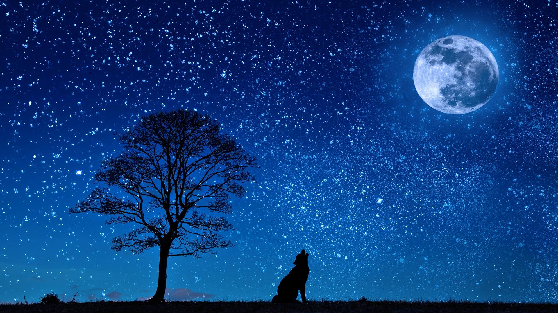 download wallpaper: wolf huilt naar de maan wallpaper