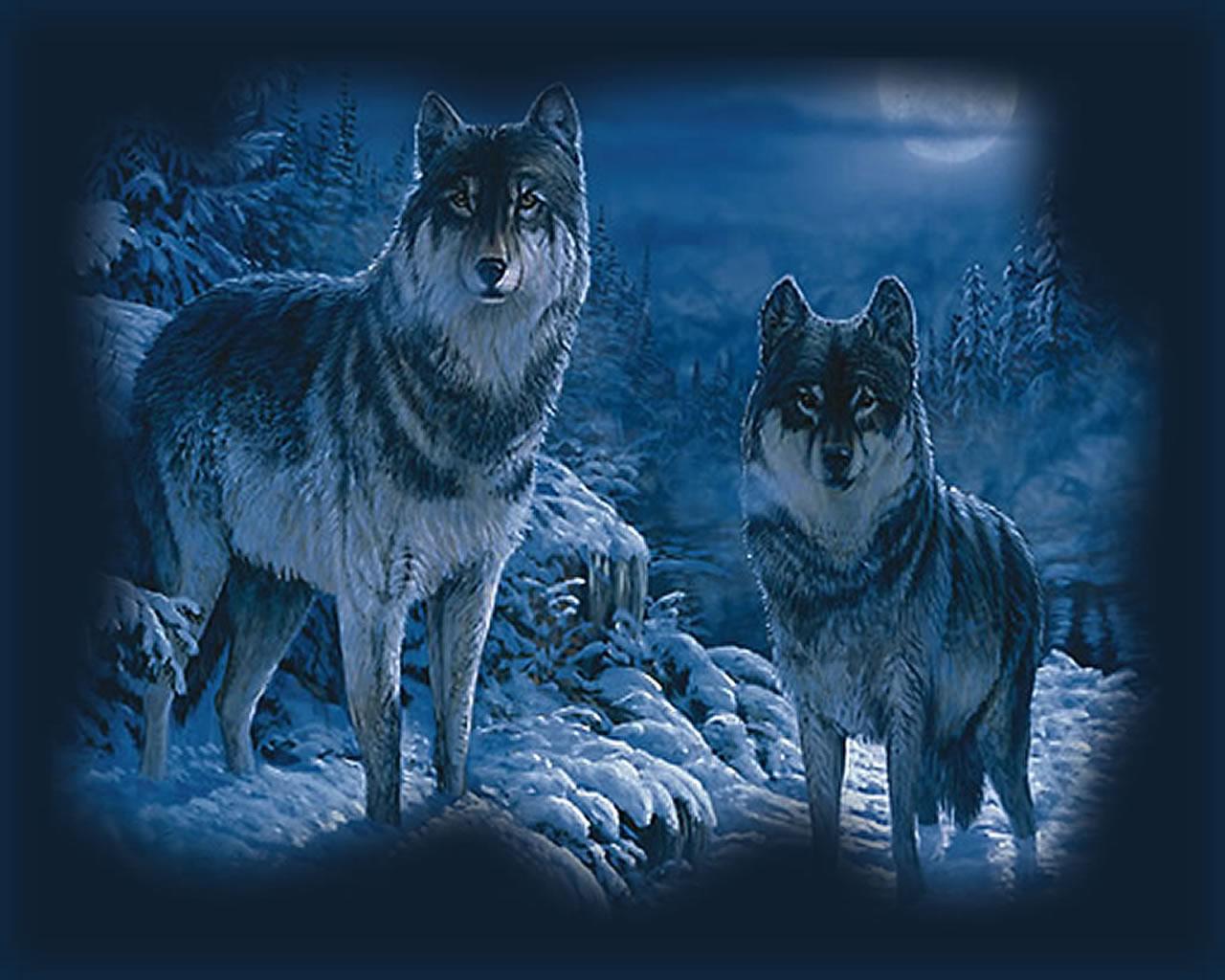 download wallpaper: wolven in de sneeuw wallpaper