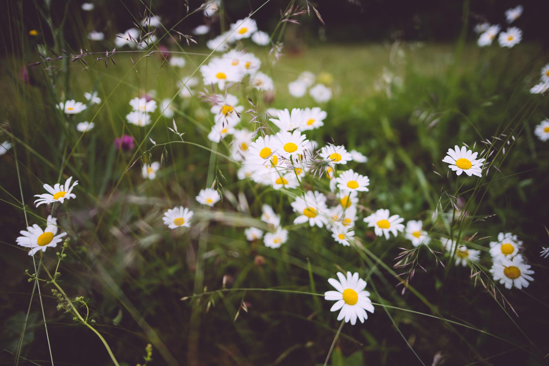 download wallpaper: zomerbloemen in het veld wallpaper
